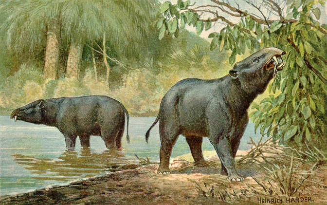 An artist's impression of the semi-aquatic Moeritherium by scientific illustrator Heinrich Harder (1858-1935) (Image: Wikimedia Commons)