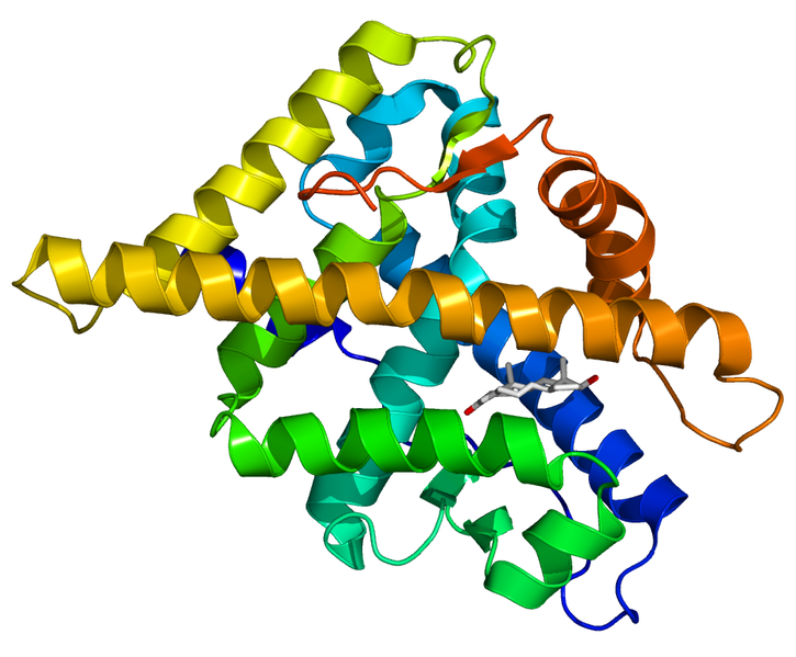 A computer generated image of the human androgen receptor protein (coloured spirals) binding to a molecule of testosterone (in white).  These signal decoding proteins bind testosterone, and become able to bind to short target sequences in the DNA.  This affects which genes are being copied by the cell into RNA and used to build new proteins.  More testosterone makes the fish's nerve cells more sensitive to signals from other cells, triggering them to 'fire' more readily (Image: Wikimedia Commons)