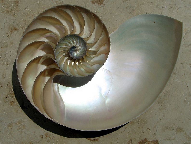 The half shell of a Nautilus showing a logarithmic spiral (Image: Wikimedia Commons).