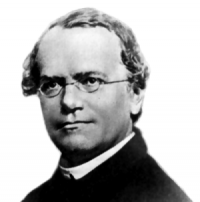 A: Gregor Mendel (Image: Wikimedia Commons)