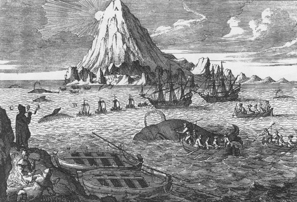 An eighteenth century etching  showing Dutch whalers hunting Bowhead whales (Balaena mysticetus)near Jan Mayen Land in the Arctic ocean.  Bowheads are named for their unusually shaped skull, which they employ to punch through the thick sea ice in order to breathe.   They overwinter and mate in arctic waters, where the males sing to attract a mate.   Bowheads are second only in size to the blue whale, and are very long-lived.  Stone harpoon heads, which went out of use at the turn of the 19th century, have been found lodged in the bodies of some individuals of today.   Listen to their calls here.