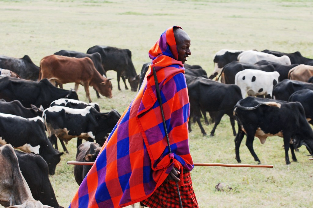 We walk as we speak; with intention.  The rhythmic motor movements that both of these processes involve are learned patterns with a cultural basis.  The distinctive walking gait of the Maasai tribe from the Kalahari in southern Africa has a very low impact on the body.  Their traditional nomadic life involves walking with their cattle for hundreds of miles, between grazing areas.  Their walking style means that they suffer from little or none of the wear-and-tear we would expect from this level of activity (Image: Wikimedia Commons)