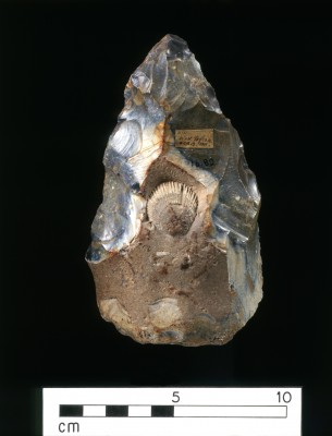The West Tofts handaxe (also called a 'biface') is believed to date to around 400 thousand years ago. This particular handaxe is intriguing because it has a shell fashioned into one side. Given that the cortex (the outer layer of the stone) around the fossil is intact, it seems likely that it was intentionally fashioned into the centre. This is significant because it could represent one of the earliest examples of an appreciation of aesthetics which extends beyond utilitarian function (Image: Reproduced by the permission of the University of Cambridge Museum of Archaeology & Anthropology. Accession no. 1916.82)