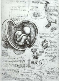 Leonardo da Vinci's observational skills were exemplary.  For instance his diagrams of the developing human embryo  (c1510-1513) are accurate enough to be useful as teaching aids today.  Through making observations of the structure of the blood vessels, he developed a theory of circulation in the body some 100 years before William Harvey. Many of the discoveries and inventions of later centuries were subsequently found to have been already described in his notebooks (Image: Wikimedia Commons)