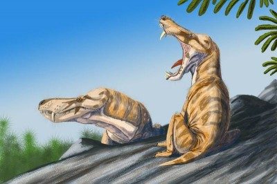 Pristerognathus vanderbyli sunning themselves on a rock.  These eutheriodont therapsids (mammal-like reptiles) lived in what is now South Africa during the Upper Permian (258.0 - 251.0 Ma) (Image: Wikimedia Commons)